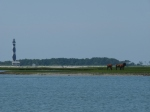 Cape Lookout lighthouse and Shackleford Banks mustangs